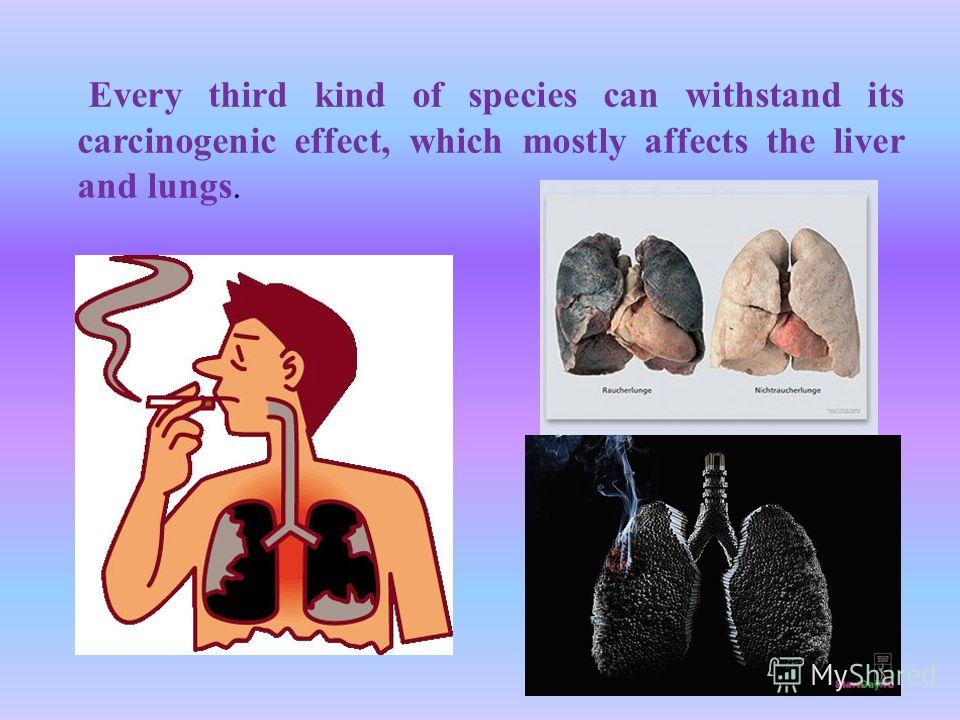 Every third kind of species can withstand its carcinogenic effect, which mostly affects the liver and lungs.