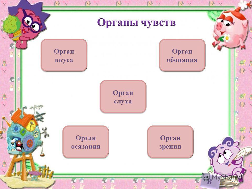 Орган вкуса Орган обоняния Орган слуха Орган зрения Орган осязания
