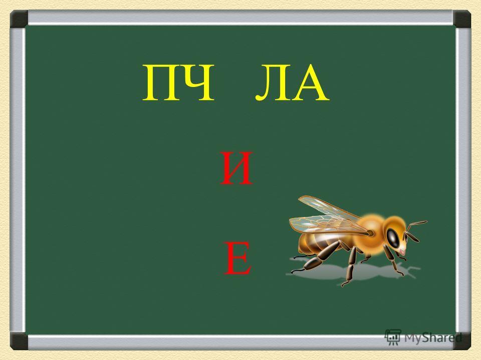 Л СА И Е
