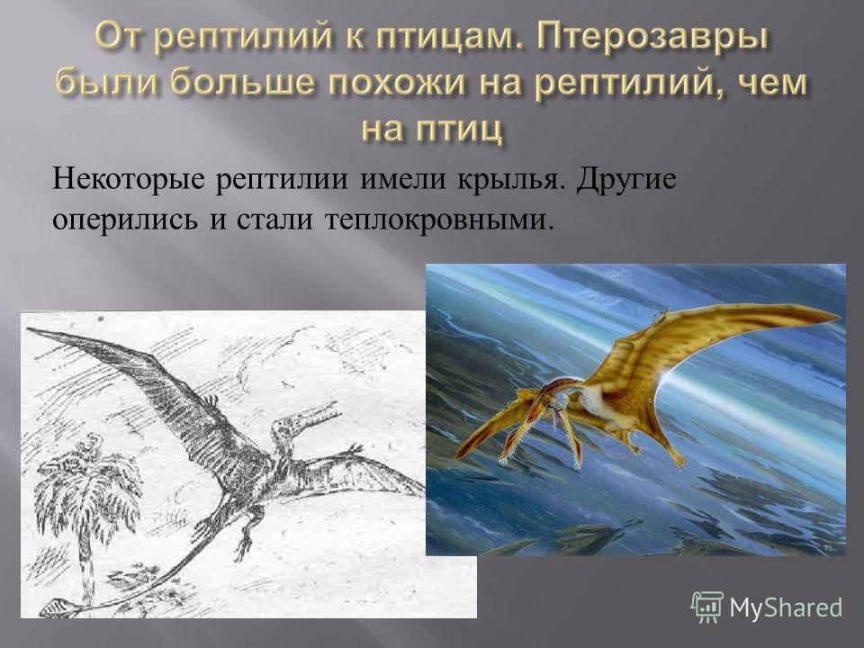 Некоторые рептилии имели крылья. Другие оперились и стали теплокровными.