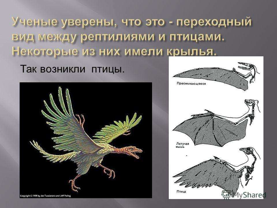 Так возникли птицы.