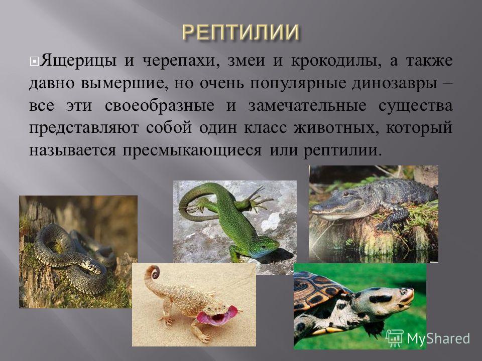 Ящерицы и черепахи, змеи и крокодилы, а также давно вымершие, но очень популярные динозавры – все эти своеобразные и замечательные существа представляют собой один класс животных, который называется пресмыкающиеся или рептилии.