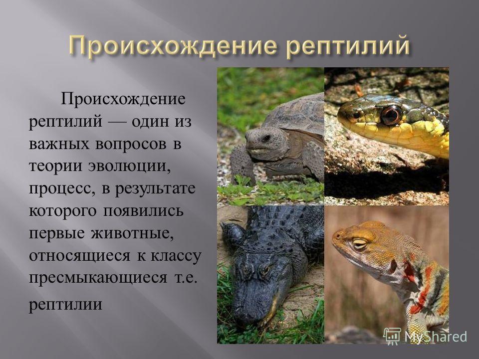 Происхождение рептилий один из важных вопросов в теории эволюции, процесс, в результате которого появились первые животные, относящиеся к классу пресмыкающиеся т. е. рептилии