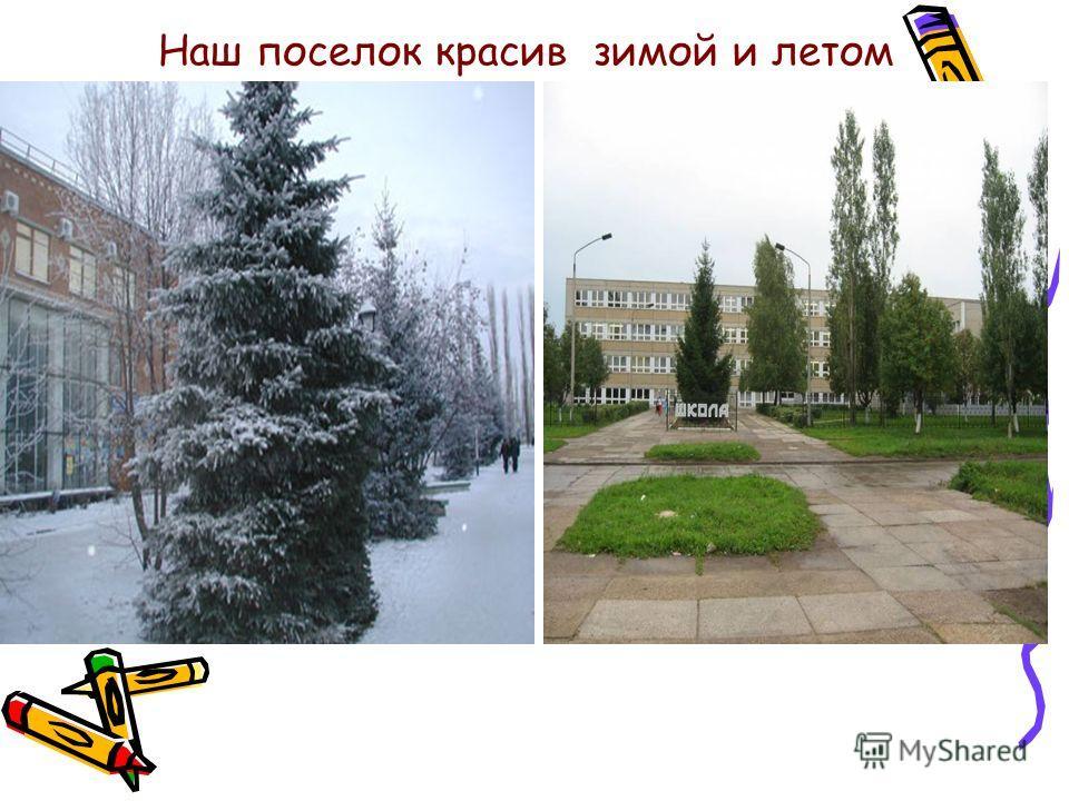Наш поселок красив зимой и летом