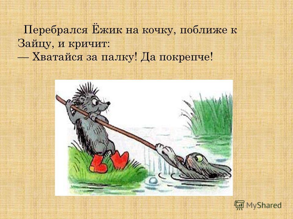 Перебрался Ёжик на кочку, поближе к Зайцу, и кричит: Хватайся за палку! Да покрепче!