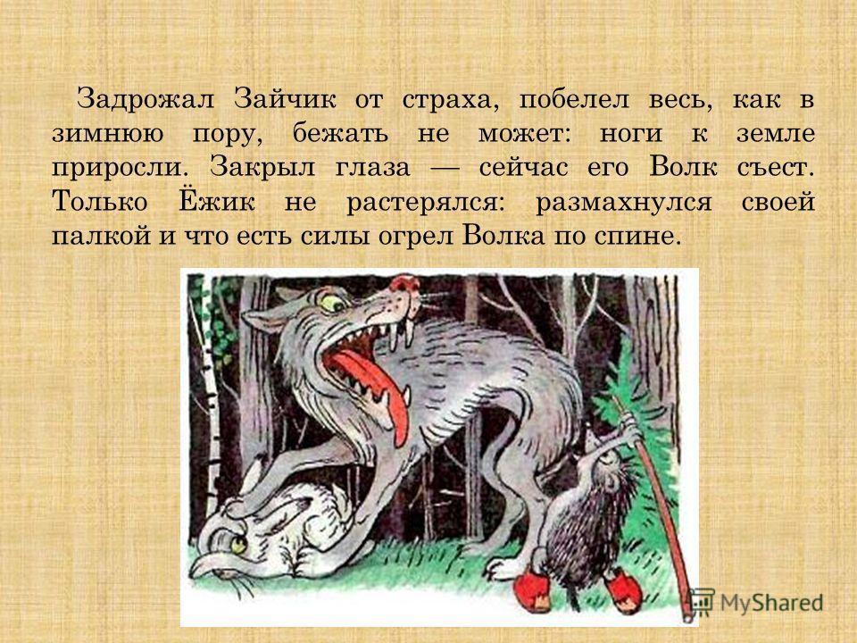 Задрожал Зайчик от страха, побелел весь, как в зимнюю пору, бежать не может: ноги к земле приросли. Закрыл глаза сейчас его Волк съест. Только Ёжик не растерялся: размахнулся своей палкой и что есть силы огрел Волка по спине.