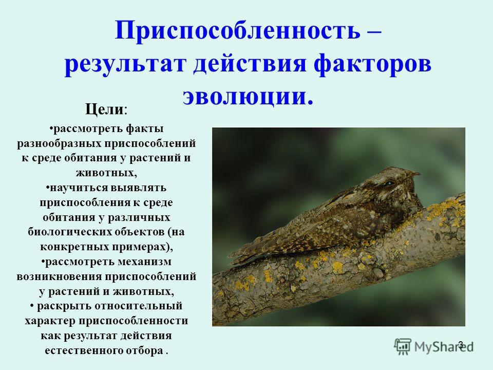 3 Приспособленность – результат действия факторов эволюции. Цели: рассмотреть факты разнообразных приспособлений к среде обитания у растений и животных, научиться выявлять приспособления к среде обитания у различных биологических объектов (на конкрет