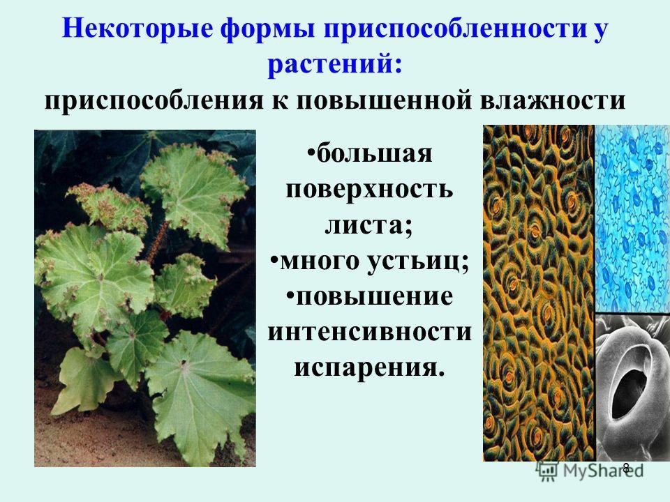 8 Некоторые формы приспособленности у растений: приспособления к повышенной влажности большая поверхность листа; много устьиц; повышение интенсивности испарения.