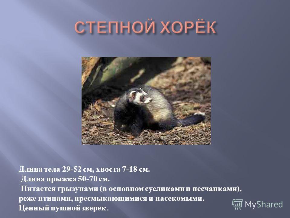 Длина тела 29-52 см, хвоста 7-18 см. Длина прыжка 50-70 см. Питается грызунами (в основном сусликами и песчанками), реже птицами, пресмыкающимися и насекомыми. Ценный пушной зверек.