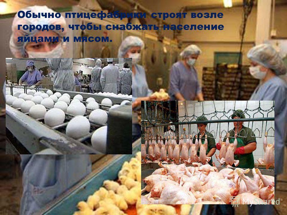 Обычно птицефабрики строят возле городов, чтобы снабжать население яйцами и мясом.