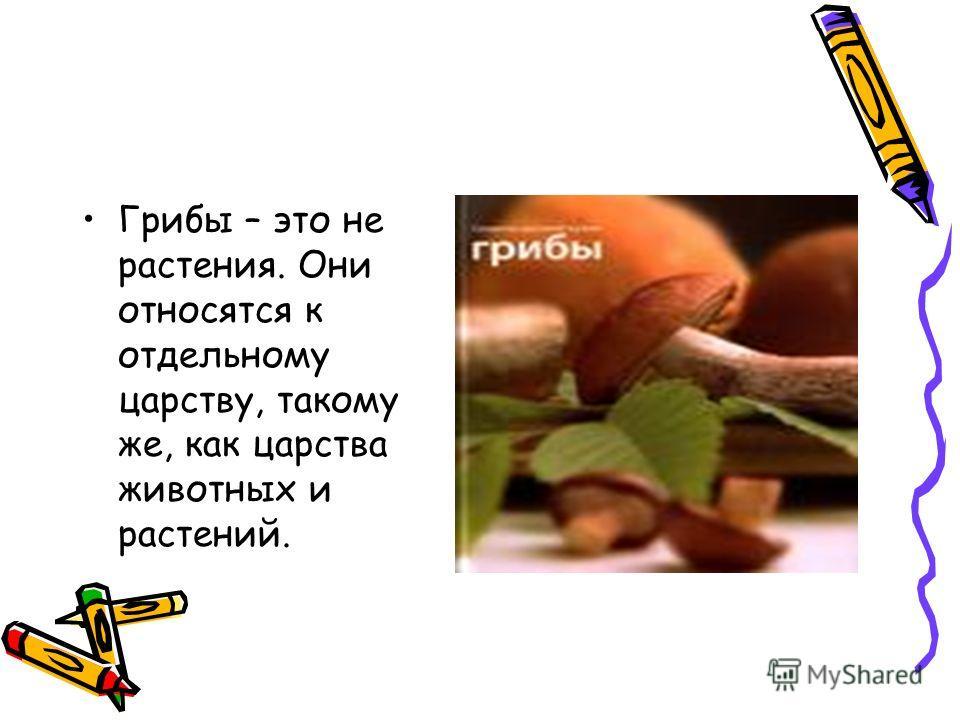 Грибы – это не растения. Они относятся к отдельному царству, такому же, как царства животных и растений.