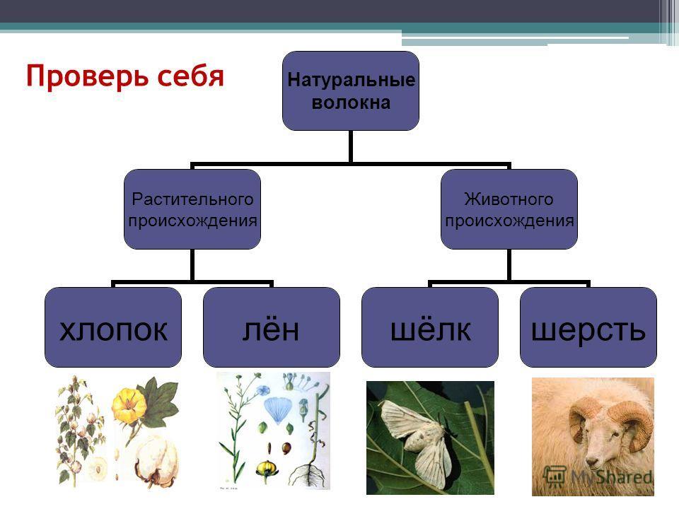 Проверь себя Натуральные волокна Растительного происхождения хлопоклён Животного происхождения шёлк шерсть