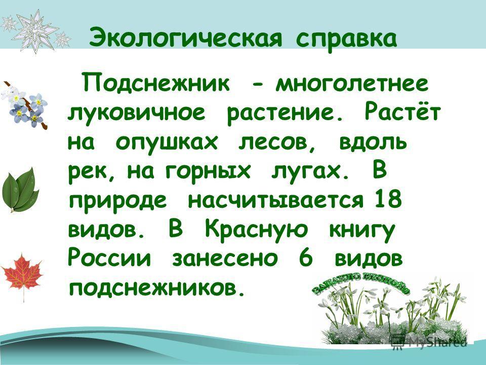 Экологическая справка Подснежник - многолетнее луковичное растение. Растёт на опушках лесов, вдоль рек, на горных лугах. В природе насчитывается 18 видов. В Красную книгу России занесено 6 видов подснежников.