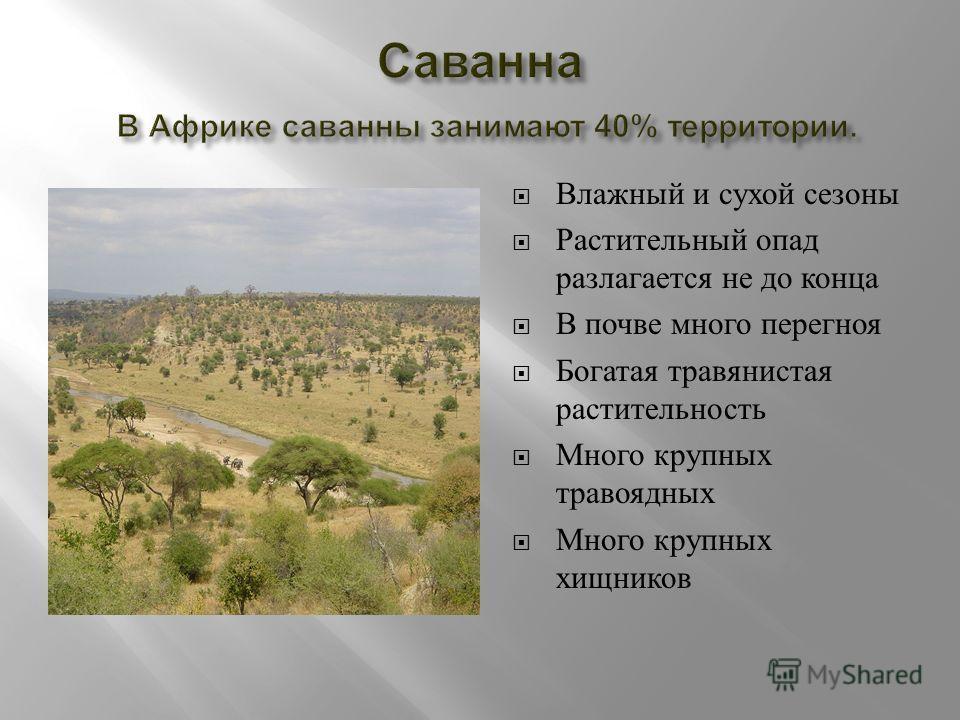 Влажный и сухой сезоны Растительный опад разлагается не до конца В почве много перегноя Богатая травянистая растительность Много крупных травоядных Много крупных хищников