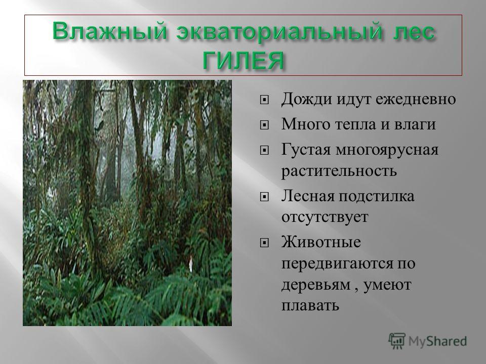 Дожди идут ежедневно Много тепла и влаги Густая многоярусная растительность Лесная подстилка отсутствует Животные передвигаются по деревьям, умеют плавать