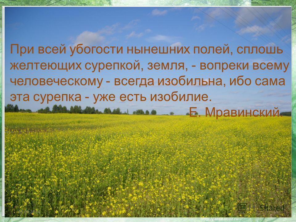 30.09.201415 При всей убогости нынешних полей, сплошь желтеющих сурепкой, земля, - вопреки всему человеческому - всегда изобильна, ибо сама эта сурепка - уже есть изобилие. Е. Мравинский.