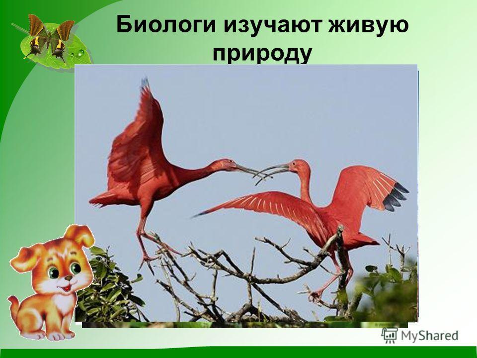 Биологи изучают живую природу