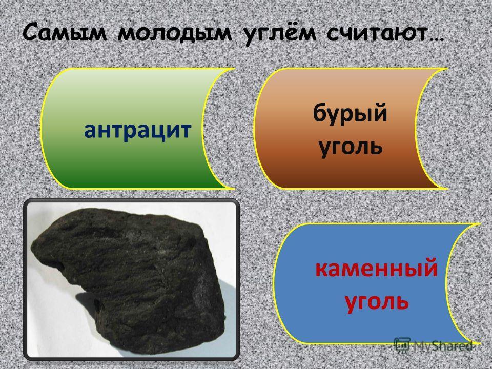 Самым молодым углём считают… антрацит каменный уголь бурый уголь