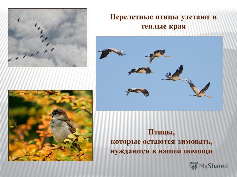 Перелетные птицы улетают в теплые края Птицы, которые остаются зимовать, нуждаются в нашей помощи