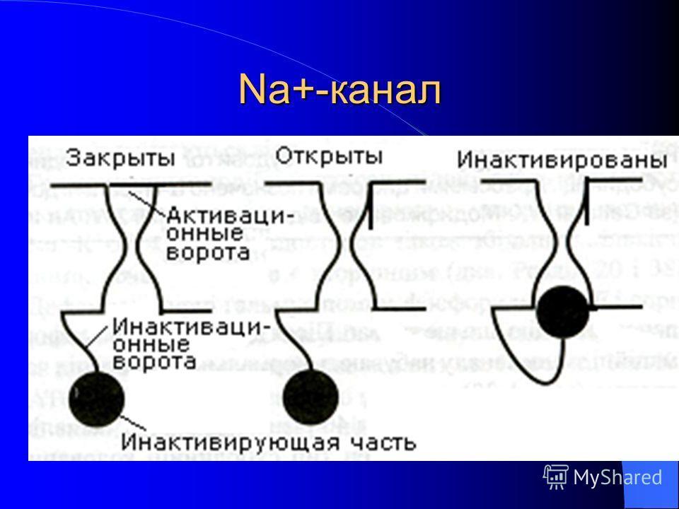 Na+-канал