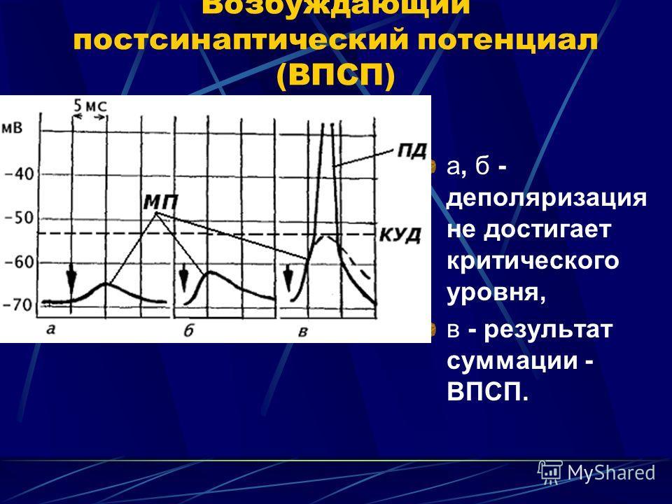 Возбуждающий постсинаптический потенциал (ВПСП) а, б - деполяризация не достигает критического уровня, в - результат суммации - ВПСП.