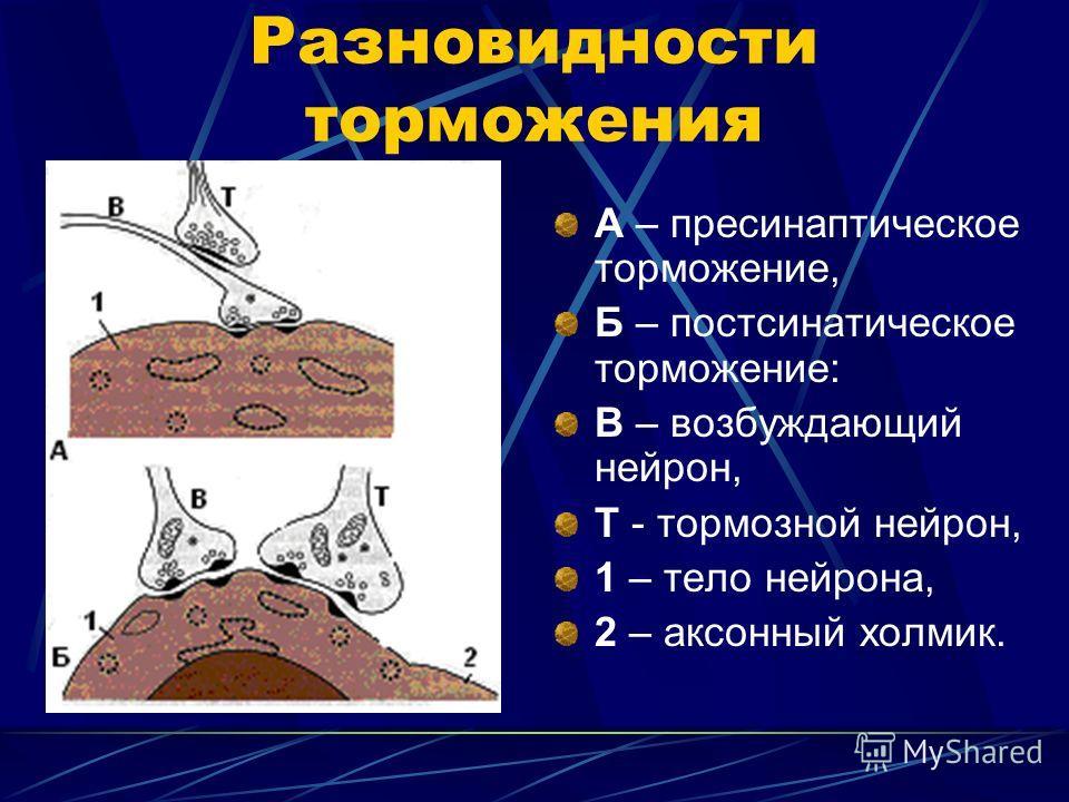 Разновидности торможения А – пресинаптическое торможение, Б – постсинаптическое торможение: В – возбуждающий нейрон, Т - тормозной нейрон, 1 – тело нейрона, 2 – аксонный холмик.
