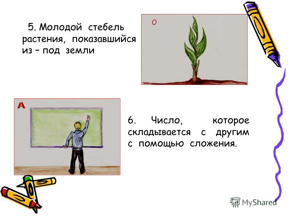 5. Молодой стебель растения, показавшийся из – под земли 6. Число, которое складывается с другим с помощью сложения.