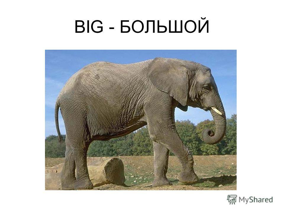 BIG - БОЛЬШОЙ