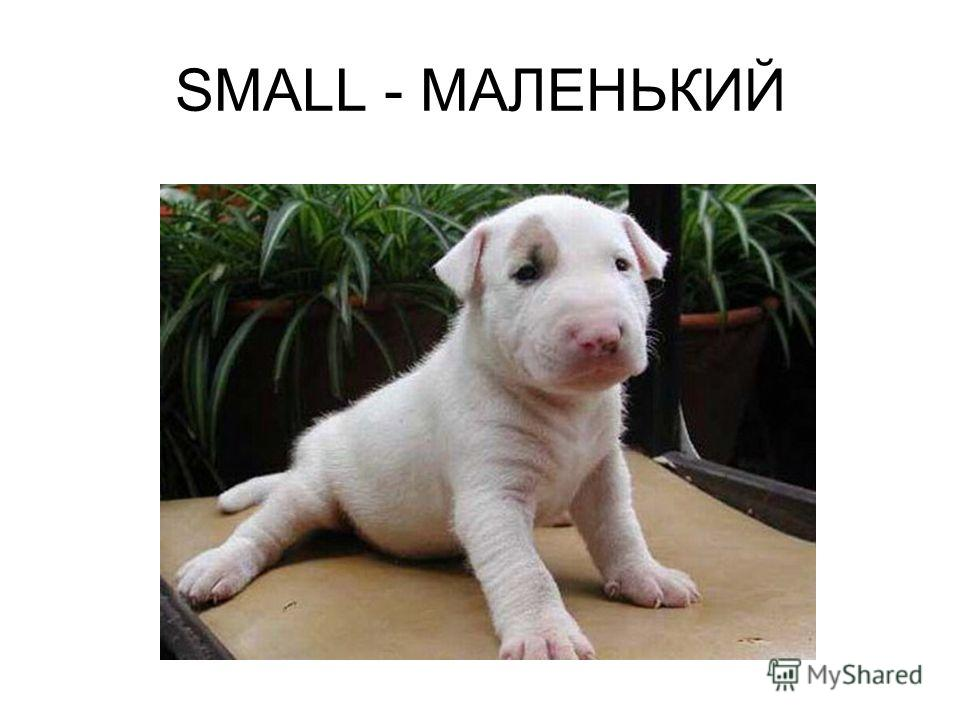 SMALL - МАЛЕНЬКИЙ