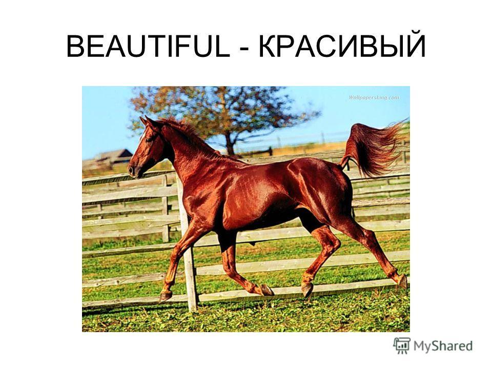 BEAUTIFUL - КРАСИВЫЙ