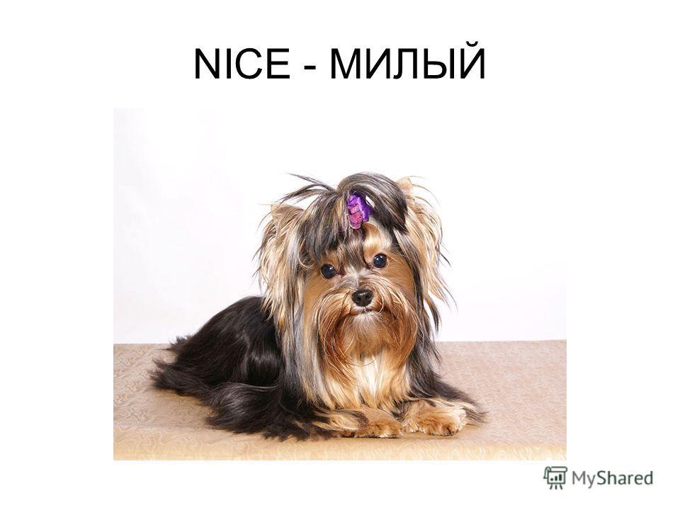 NICE - МИЛЫЙ