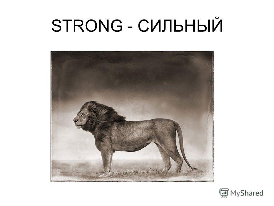 STRONG - СИЛЬНЫЙ