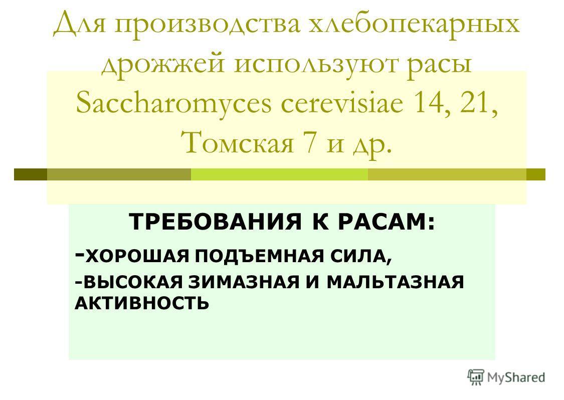Для производства хлебопекарных дрожжей используют расы Saccharomyces cerevisiae 14, 21, Томская 7 и др. ТРЕБОВАНИЯ К РАСАМ: - ХОРОШАЯ ПОДЪЕМНАЯ СИЛА, -ВЫСОКАЯ ЗИМАЗНАЯ И МАЛЬТАЗНАЯ АКТИВНОСТЬ