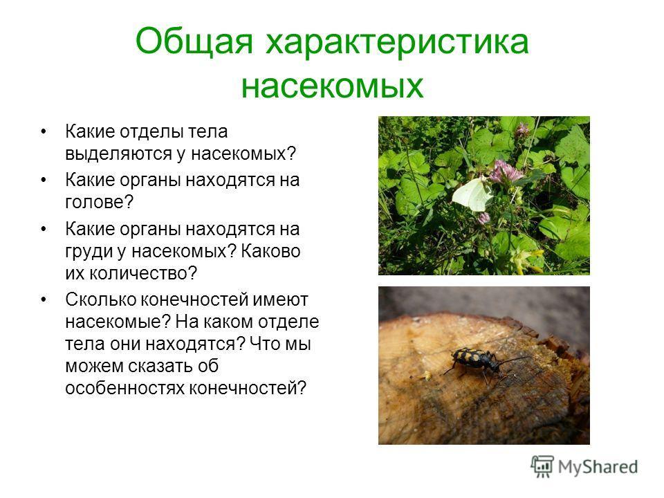 Общая характеристика насекомых Какие отделы тела выделяются у насекомых? Какие органы находятся на голове? Какие органы находятся на груди у насекомых? Каково их количество? Сколько конечностей имеют насекомые? На каком отделе тела они находятся? Что
