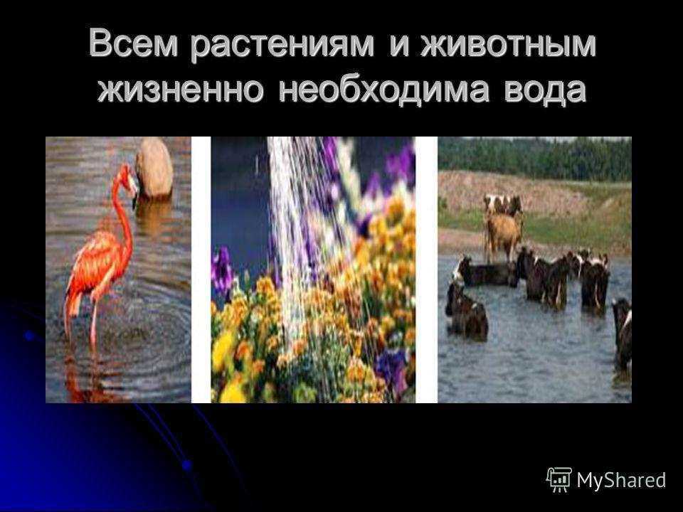 Всем растениям и животным жизненно необходима вода