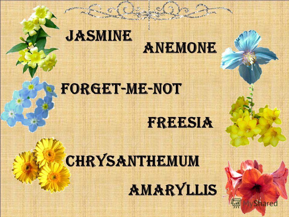 freesia forget-me-not jasmine anemone amaryllis chrysanthemum