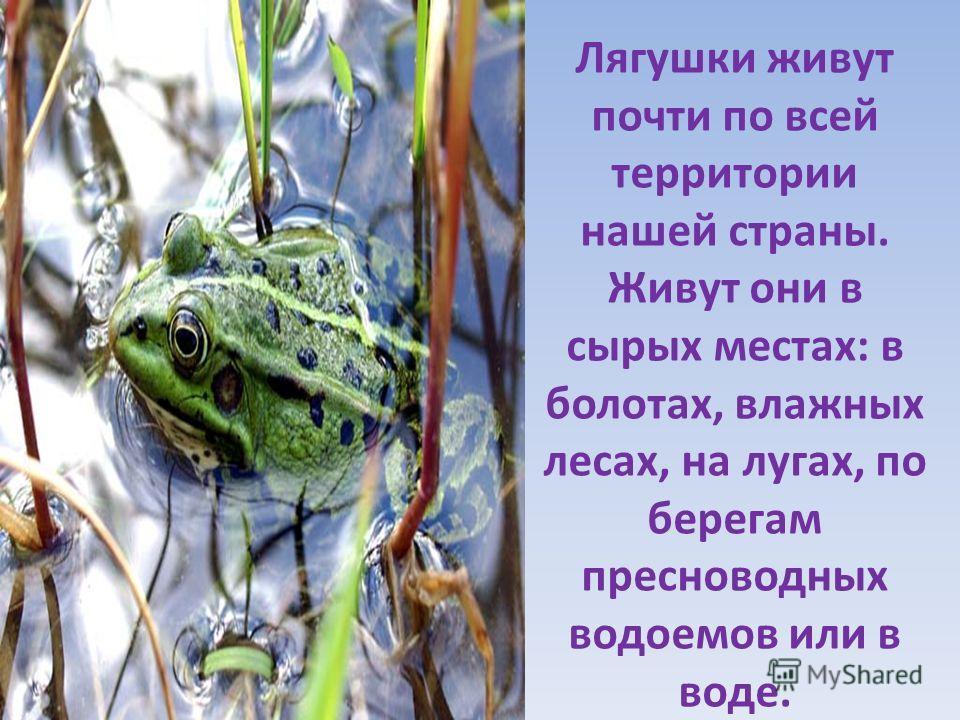 Лягушки живут почти по всей территории нашей страны. Живут они в сырых местах: в болотах, влажных лесах, на лугах, по берегам пресноводных водоемов или в воде.