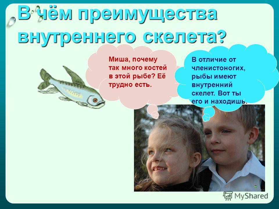 В чём преимущества внутреннего скелета ? Миша, почему так много костей в этой рыбе? Её трудно есть. В отличие от членистоногих, рыбы имеют внутренний скелет. Вот ты его и находишь.