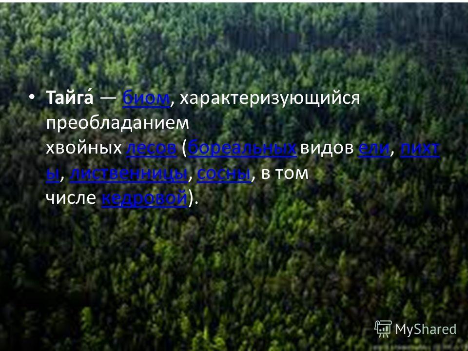 Тайга Тайга́ биом, характеризующийся преобладанием хвойных лесов (бореальных видов ели, пихт ы, лиственницы, сосны, в том числе кедровой).биомлесовбореальныхелипихт ылиственницысосныкедровой