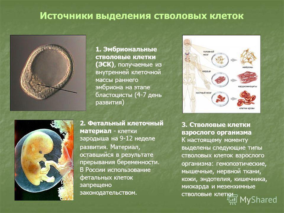 1. Эмбриональные стволовые клетки (ЭСК), получаемые из внутренней клеточной массы раннего эмбриона на этапе бластоцисты (4-7 день развития) 2. Фетальный клеточный материал - клетки зародыша на 9-12 неделе развития. Материал, оставшийся в результате п