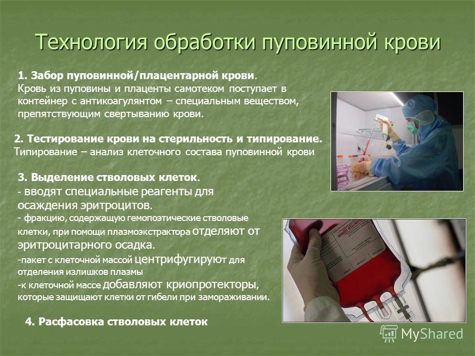 Технология обработки пуповинной крови 1. Забор пуповинной/плацентарной крови. Кровь из пуповины и плаценты самотеком поступает в контейнер с антикоагулянтом – специальным веществом, препятствующим свертыванию крови. 2. Тестирование крови на стерильно