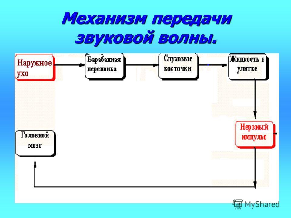 Механизм передачи звуковой волны.