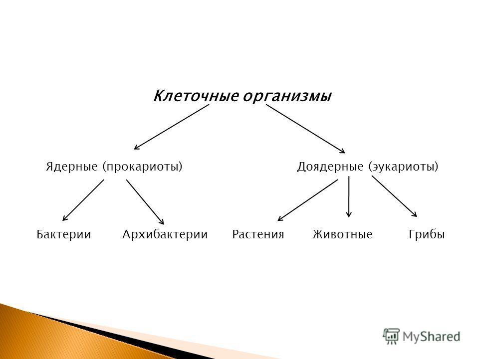 Клеточные организмы Ядерные (прокариоты)Доядерные (эукариоты) Бактерии АрхибактерииРастения ЖивотныеГрибы