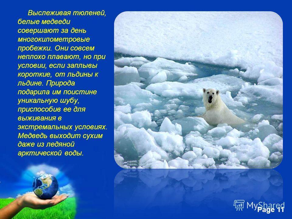 Free Powerpoint Templates Page 11 Выслеживая тюленей, белые медведи совершают за день многокилометровые пробежки. Они совсем неплохо плавают, но при условии, если заплывы короткие, от льдины к льдине. Природа подарила им поистине уникальную шубу, при