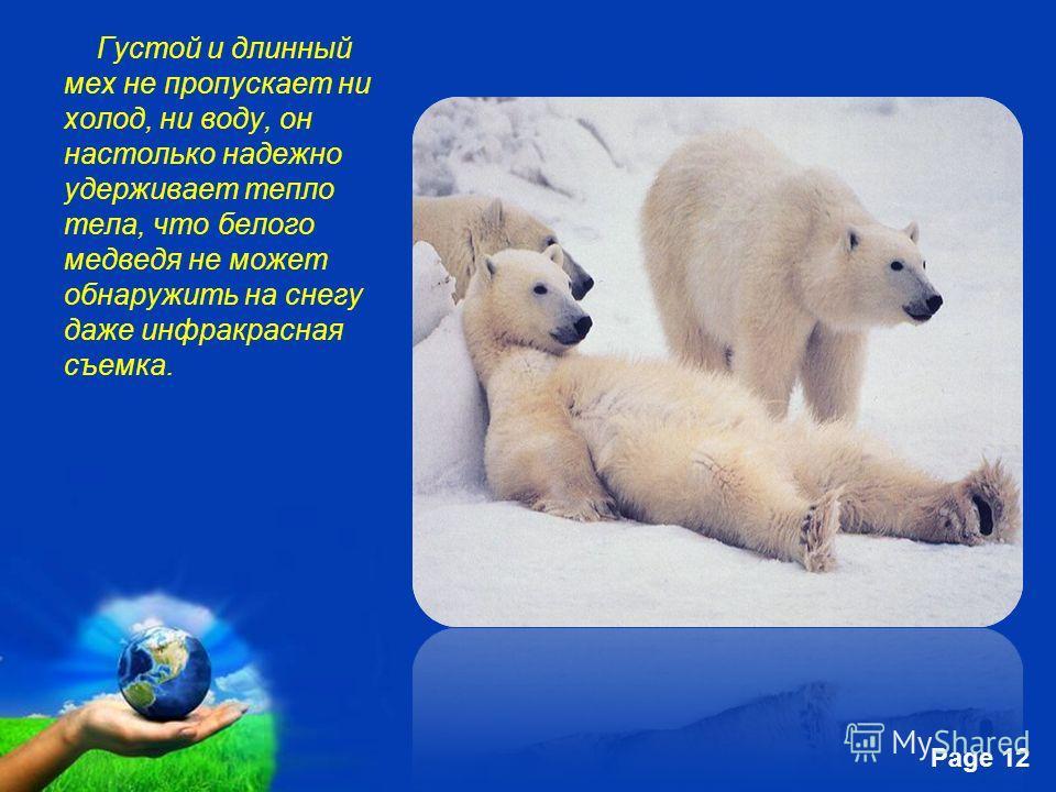 Free Powerpoint Templates Page 12 Густой и длинный мех не пропускает ни холод, ни воду, он настолько надежно удерживает тепло тела, что белого медведя не может обнаружить на снегу даже инфракрасная съемка.