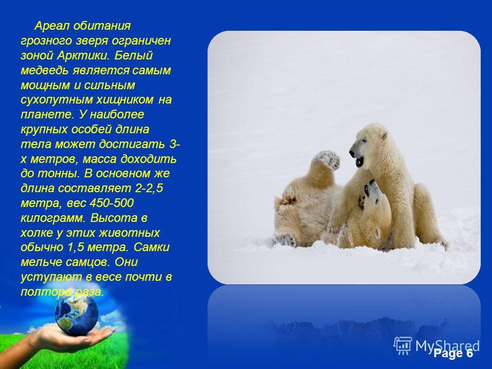 Free Powerpoint Templates Page 6 Ареал обитания грозного зверя ограничен зоной Арктики. Белый медведь является самым мощным и сильным сухопутным хищником на планете. У наиболее крупных особей длина тела может достигать 3- х метров, масса доходить до