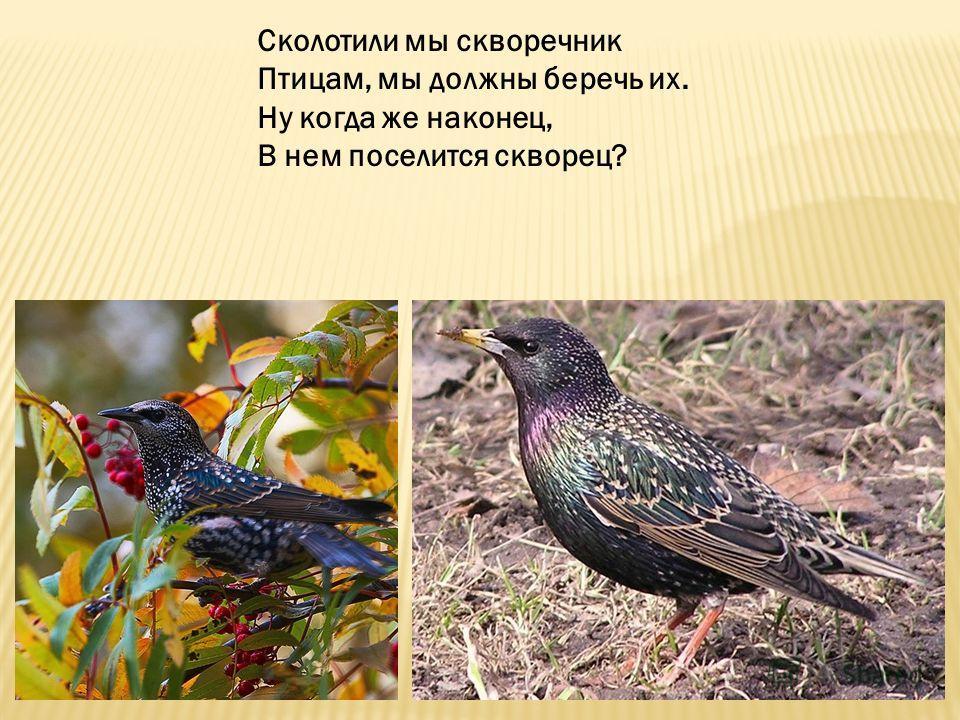 Сколотили мы скворечник Птицам, мы должны беречь их. Ну когда же наконец, В нем поселится скворец?