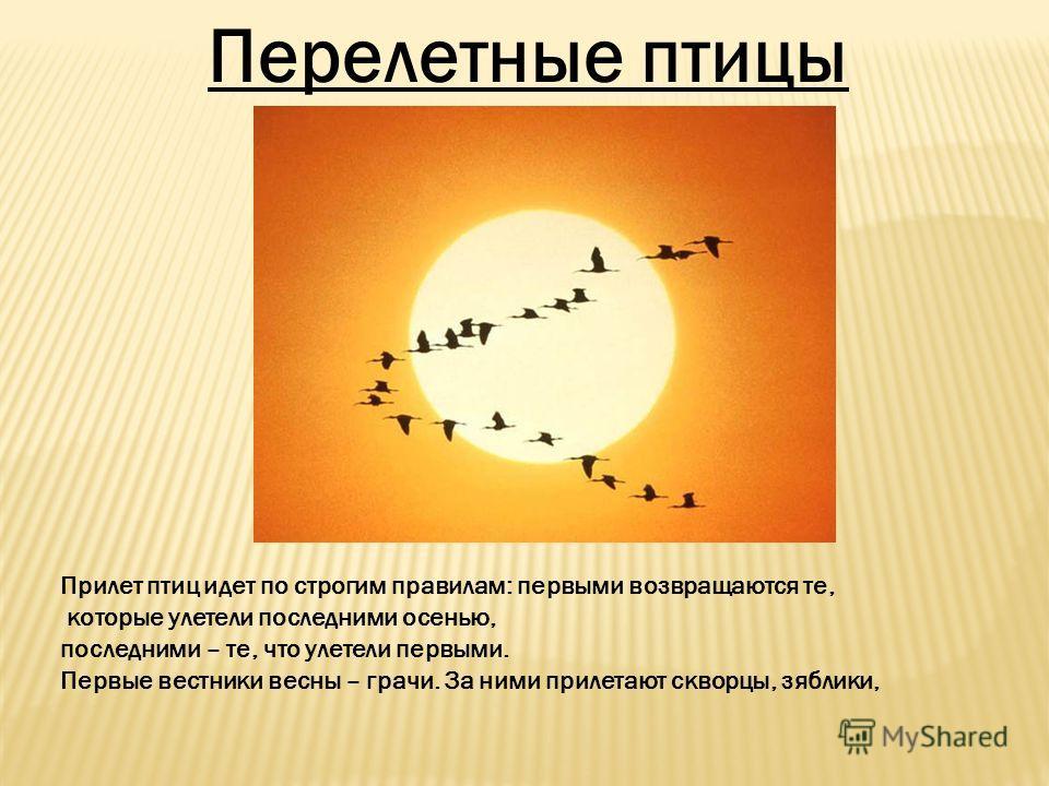 Перелетные птицы Прилет птиц идет по строгим правилам: первыми возвращаются те, которые улетели последними осенью, последними – те, что улетели первыми. Первые вестники весны – грачи. За ними прилетают скворцы, зяблики,