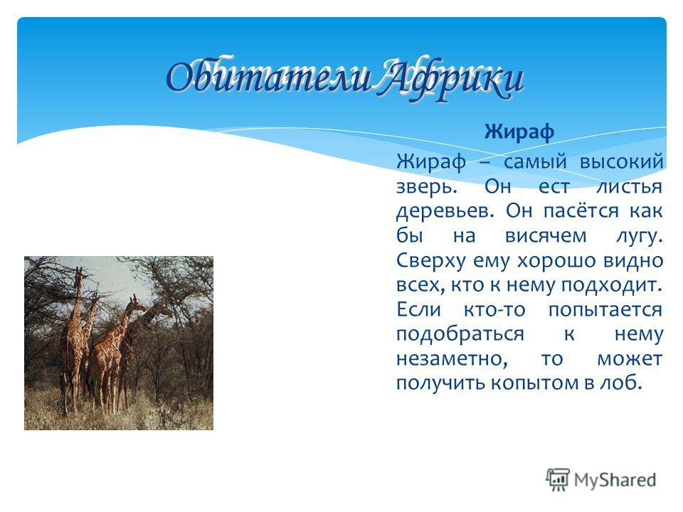 Обитатели Африки Жираф Жираф – самый высокий зверь. Он ест листья деревьев. Он пасётся как бы на висячем лугу. Сверху ему хорошо видно всех, кто к нему подходит. Если кто-то попытается подобраться к нему незаметно, то может получить копытом в лоб. Об