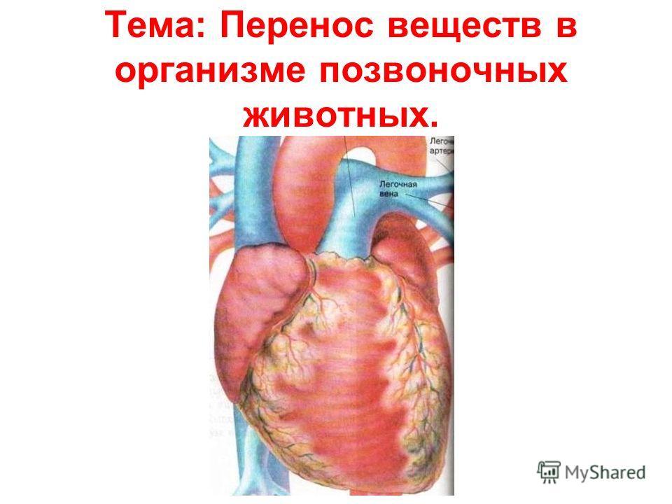 Тема: Перенос веществ в организме позвоночных животных.